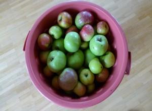 Meine erste …. ganz eigene … Apfelernte! :-)