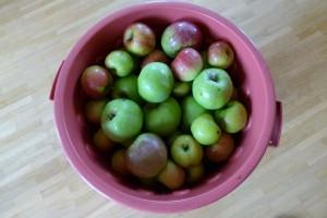 Man sieht die Oscartonne voller Äpfel von oben